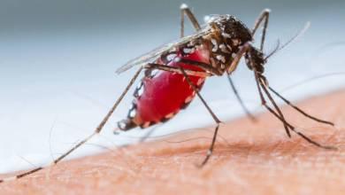 Foto de Aditivo para plástico que ajuda a combater o mosquito Aedes aegypti