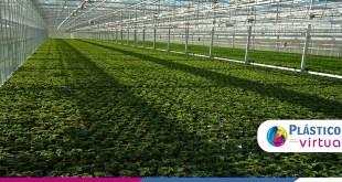 Você sabe quais as inovações do plástico para a agricultura?