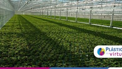 Foto de Você sabe quais as inovações do plástico para a agricultura?