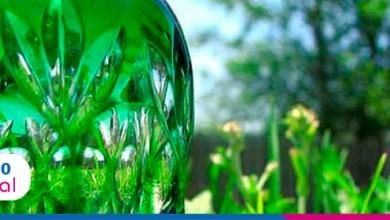 Foto de Maior produtividade com o cultivo de bioplástico compostável