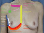 Understanding the Fascial Supporting Network of the Breast: Key Ligamentous Structures in Breast Augmentation and a Proposed System of Nomenclature