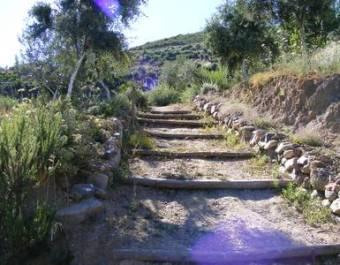 Botanical Park Path