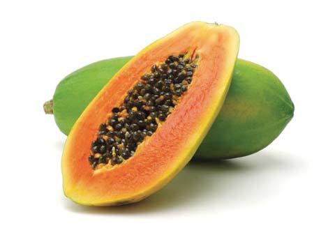 GPL - Productos Tropicales Papayón