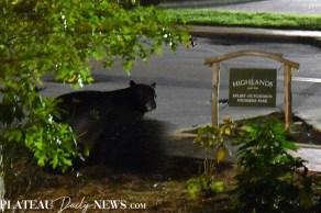 bear (11)