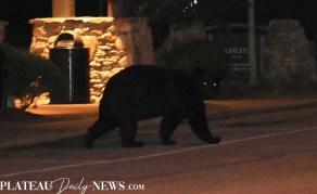 bear (12)