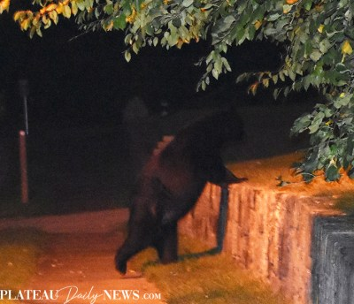 bear (13)