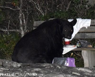bear (15)