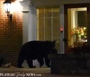 bear (19)