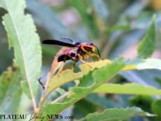 bees.flowers (7)