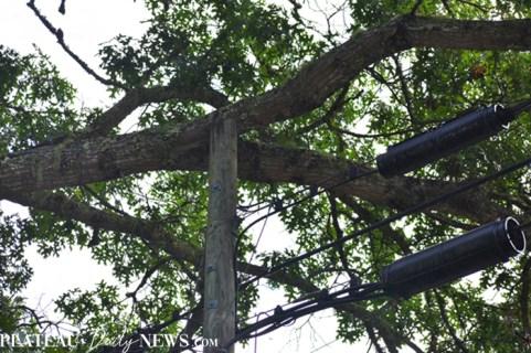 Fallen.Tree (3)