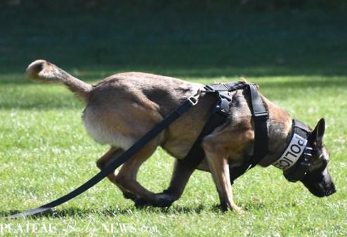 HPD.Dog (3)