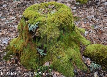 Highlands.Biological (12)
