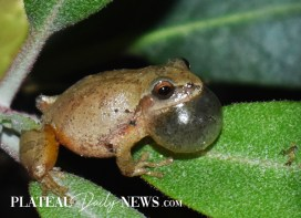 calendar.frog