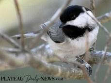 audubon (100)