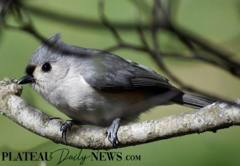 audubon (13)