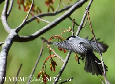 audubon (14)