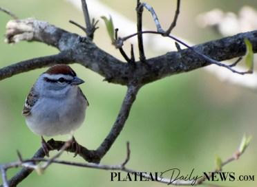 audubon (15)