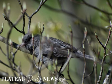 audubon (16)