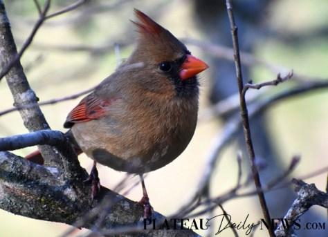 audubon (2)
