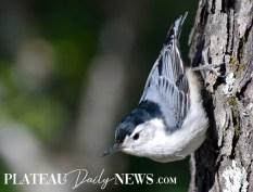 audubon (22)