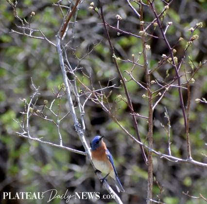 audubon (31)