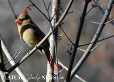 audubon (46)