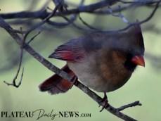 audubon (49)
