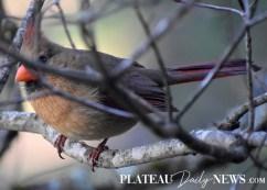audubon (51)