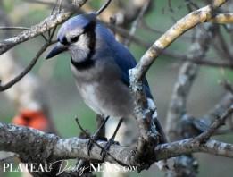 audubon (57)