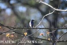 audubon (60)