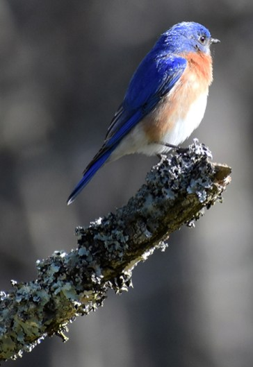 audubon (66)
