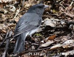 audubon (75)