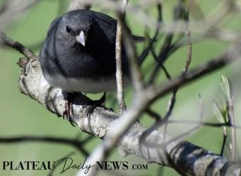 audubon (9)