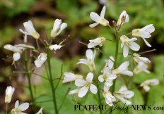 Botanical.Garden (15)