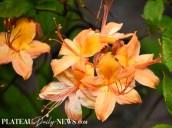 Botanical.Garden (2)