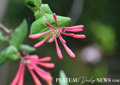 Botanical.Garden (3)