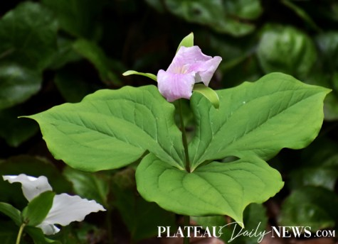 Botanical.Garden (38)