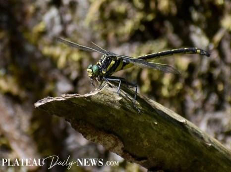 Dragonflies (15)