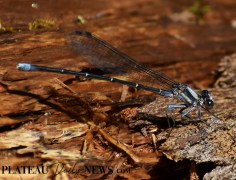 Dragonflies (19)