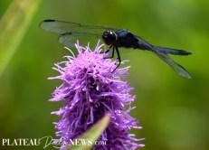 Dragonflies (22)