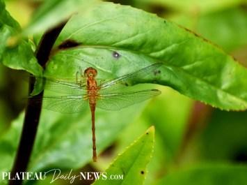 Dragonflies (29)