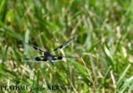 Dragonflies (33)