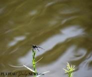 Dragonflies (37)