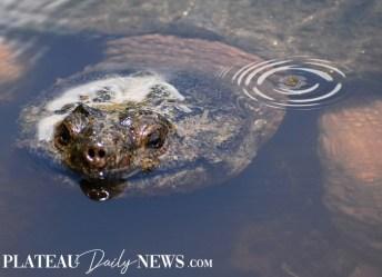 Turtles (15)