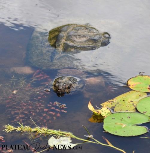 Turtles (18)