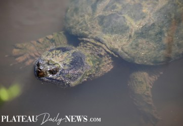 Turtles (20)