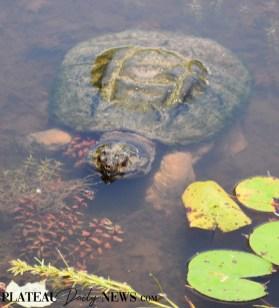Turtles (21)