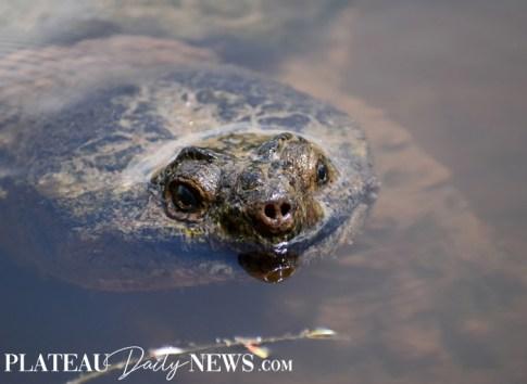 Turtles (27)