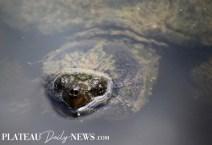 Turtles (6)