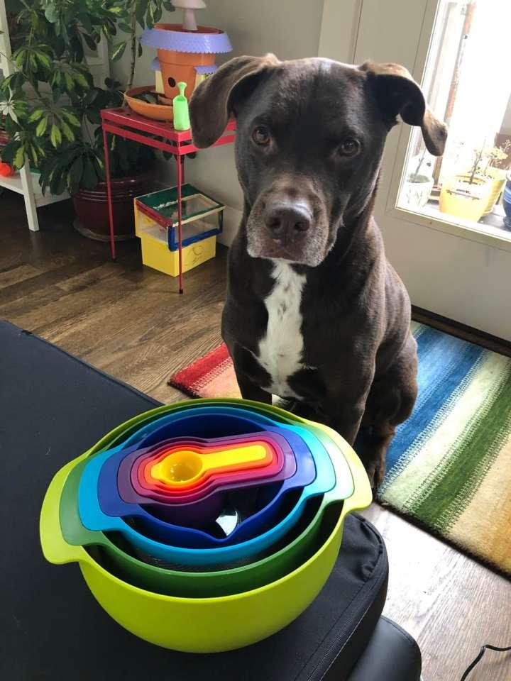 Big brown dog sitting by a 9 piece rainbow nesting bowl set